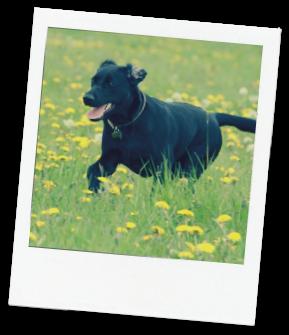 exercise-dog